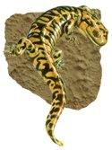 tiger_salamander