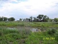 C42_Jeffrey_Island_wetland_TN