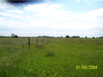 C44_Jeffrey_Island_pasture_TN