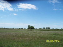 C45_Jeffrey_Island_grazing_area_TN
