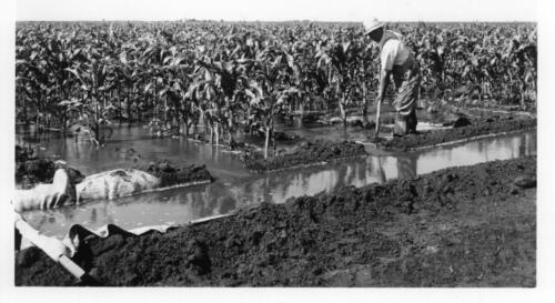 farmer irrigating crops
